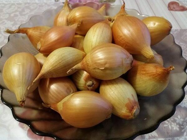 Необычная форма и сладкий вкус – лук-шалот банановый. особенности выращивания культуры