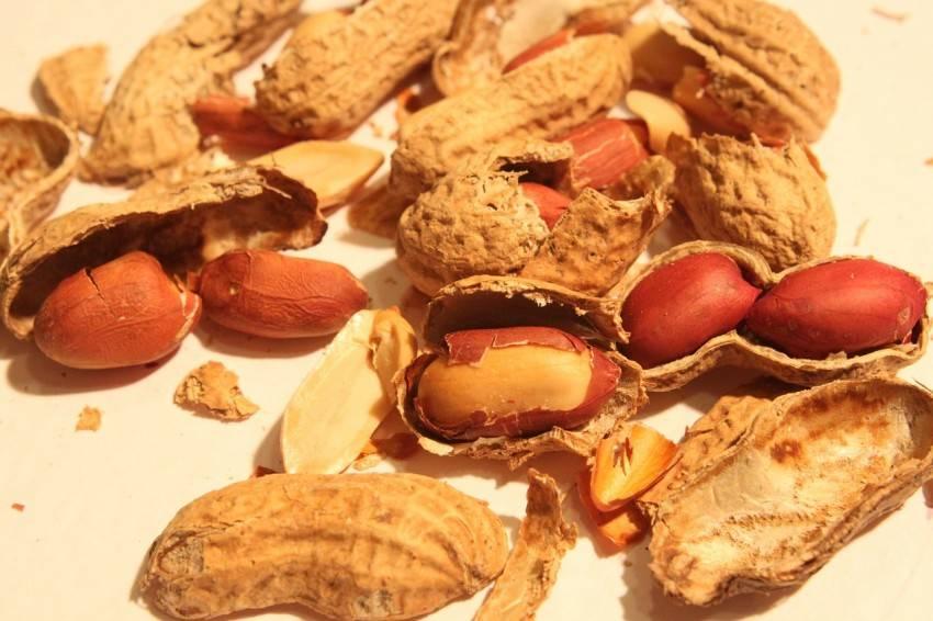 Грецкий орех: как посадить из плода, можно ли вырастить дерево из ядер в домашних условиях, когда делать разведение и выбор саженцев (семян) для выращивания