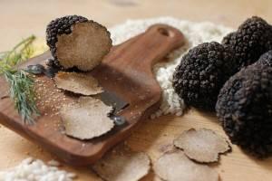 Трюфель белый – гриб. описание, полезные свойства и применение