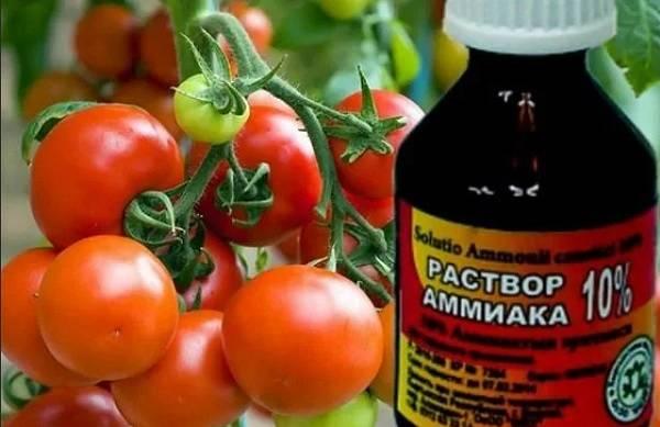Нашатырный спирт для рассады томатов – как подкормить, в домашних условиях, пропорции, дозировка