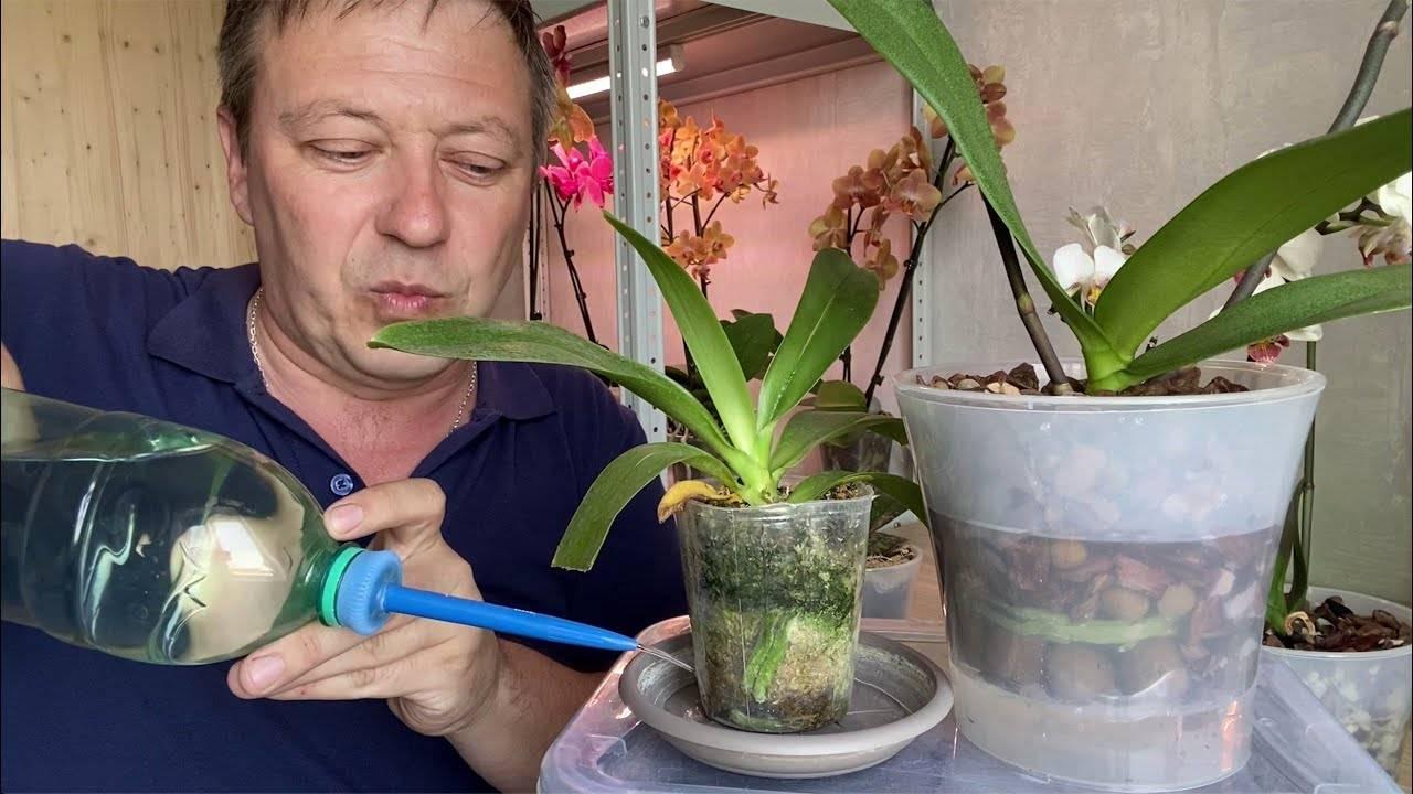 Как поливать фаленопсис? правила ухода и особенности полива орхидеи