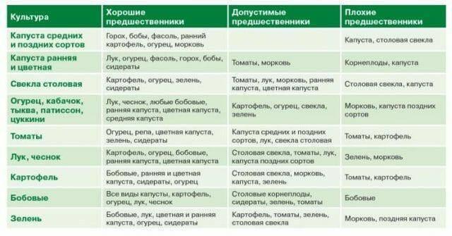 После чего садить морковь: можно ли в качестве предшественников использовать лук, чеснок, огурцы, клубнику, какие культуры сеять на следующий год в открытом грунте? русский фермер