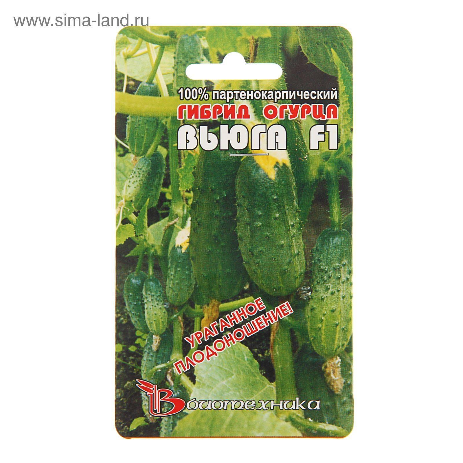 Огурец вьюга: описание и характеристика сорта, урожайность с фото