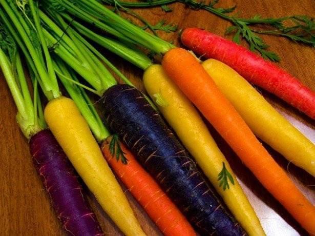 Морковь изначально была фиолетовой.. какого цвета изначально (до селекции) была морковь?