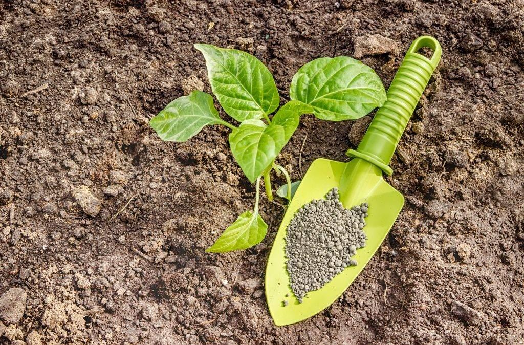 25 удобрений для подкормки перцев, которые найдутся в любом хозяйстве