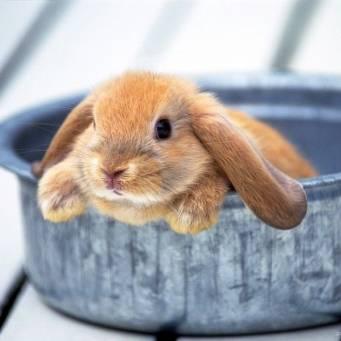 Как выпаивать крольчат