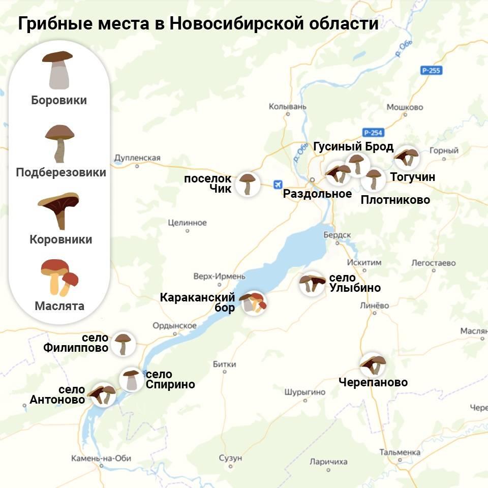 Грибы сибири — куда идти за урожаем