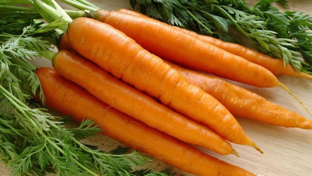 Морковь чемпион: описание и характеристика сорта, основные особенности, преимущества, недостатки, правила выращивания, урожайность, похожие виды русский фермер