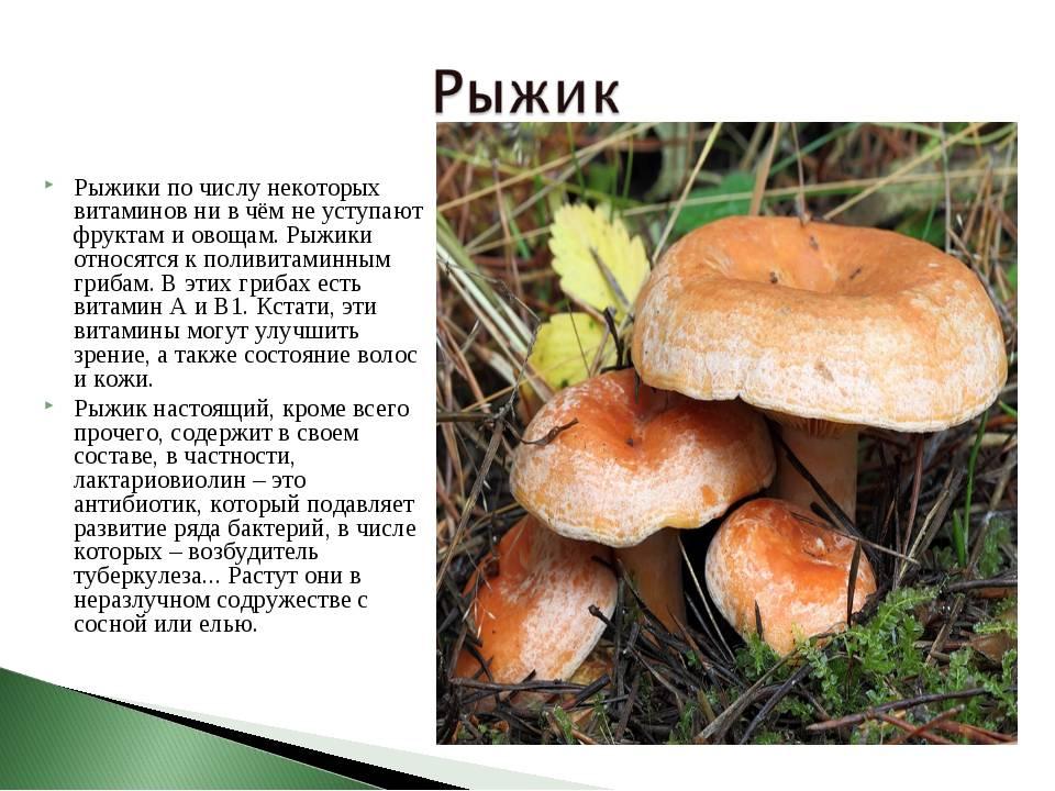 Белый гриб— 101% пользы для здоровья | good-tips.pro