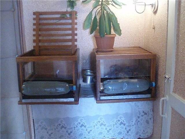 Содержание и разведение перепелов в квартире, что делать с запахом