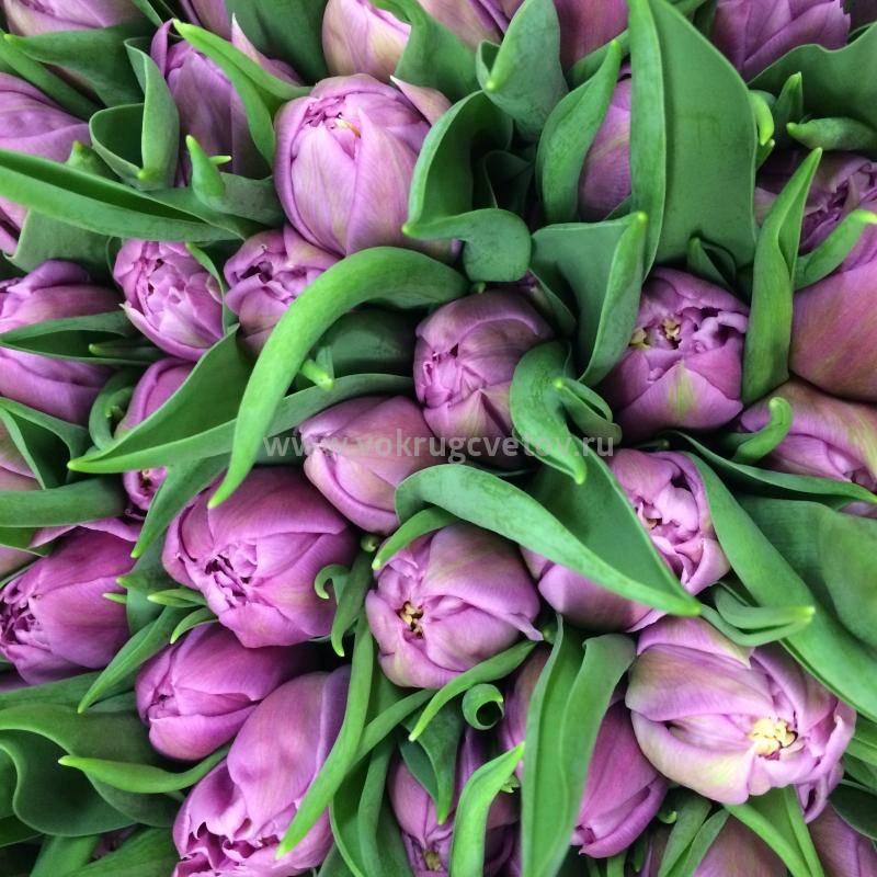 Пионовидные тюльпаны — лучшие сорта и правила выращивания