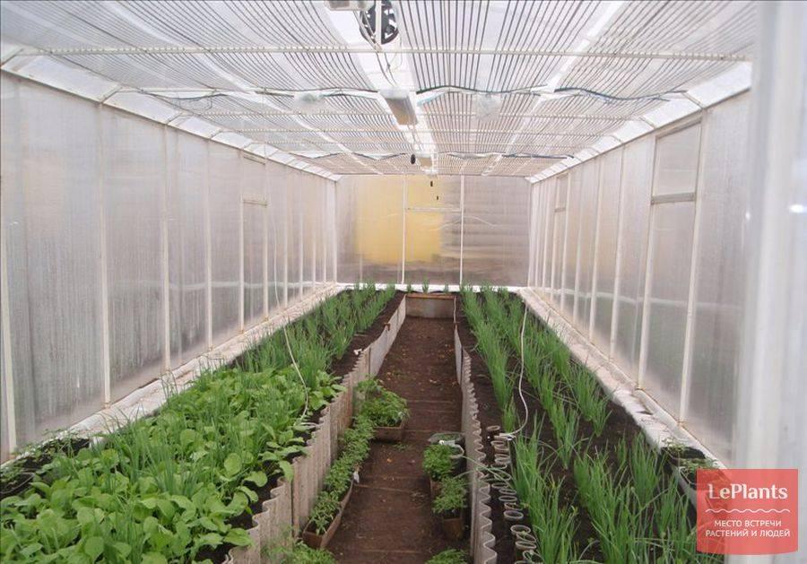 Как правильно выращивать огурцы в теплице зимой и круглый год > видео + фото