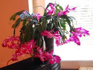 Уход за комнатными растениями и цветами в домашних условиях