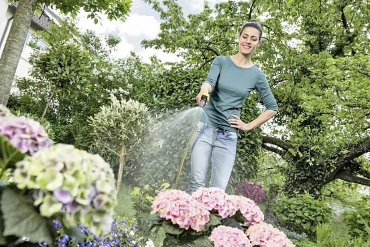 Как сделать почву кислой для гортензии: чем поливать для подкисления