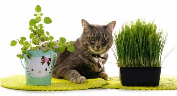 Комнатное растение замиокулькас ядовитый или нет для человека и животного?