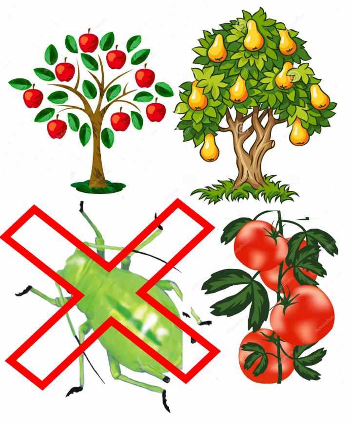 Интавир - инструкция по применению и когда можно снимать плоды после обработки (фото и видео)