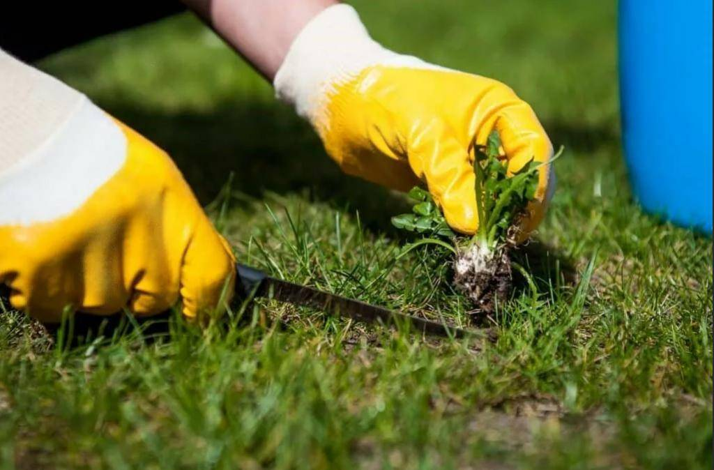Как бороться с сорняками на дачном участке: лучшие способы