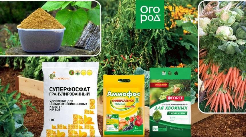 Фосфорные удобрения: применение, виды, внесение