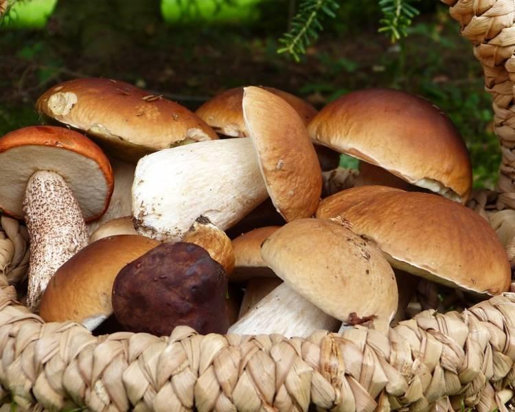 Как сушить белые грибы в домашних условиях на зиму
