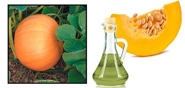 Тыквенное масло / полезные свойства для организма человека
