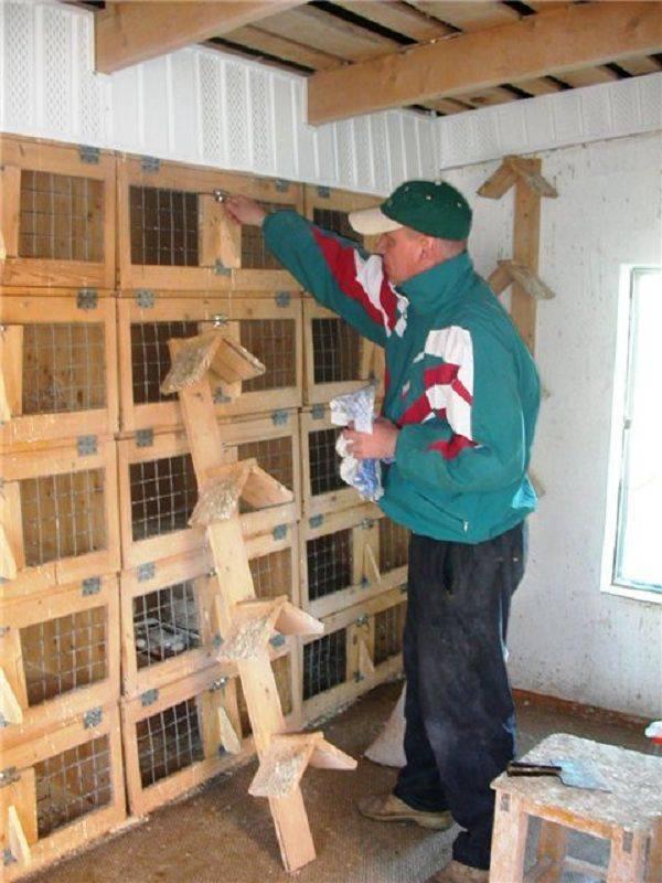 Гнёзда для голубей своими руками: размеры, инструкция, фото