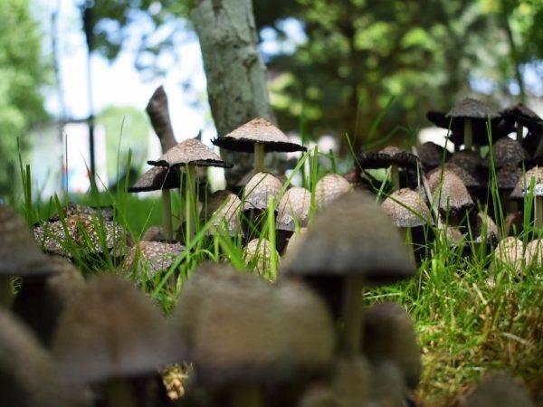 Появление грибов и желтых пятен на газоне весной, решение проблем