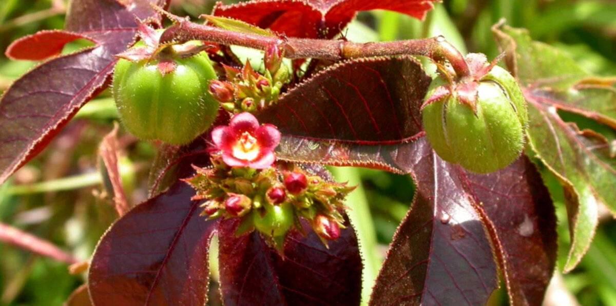 Цветок гастерия: как вырастить его в домашних условиях.