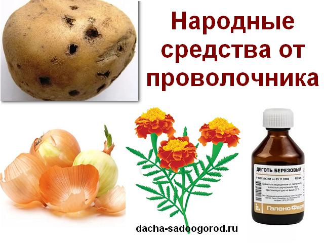 Как бороться с проволочником картофеля – эффективные методы