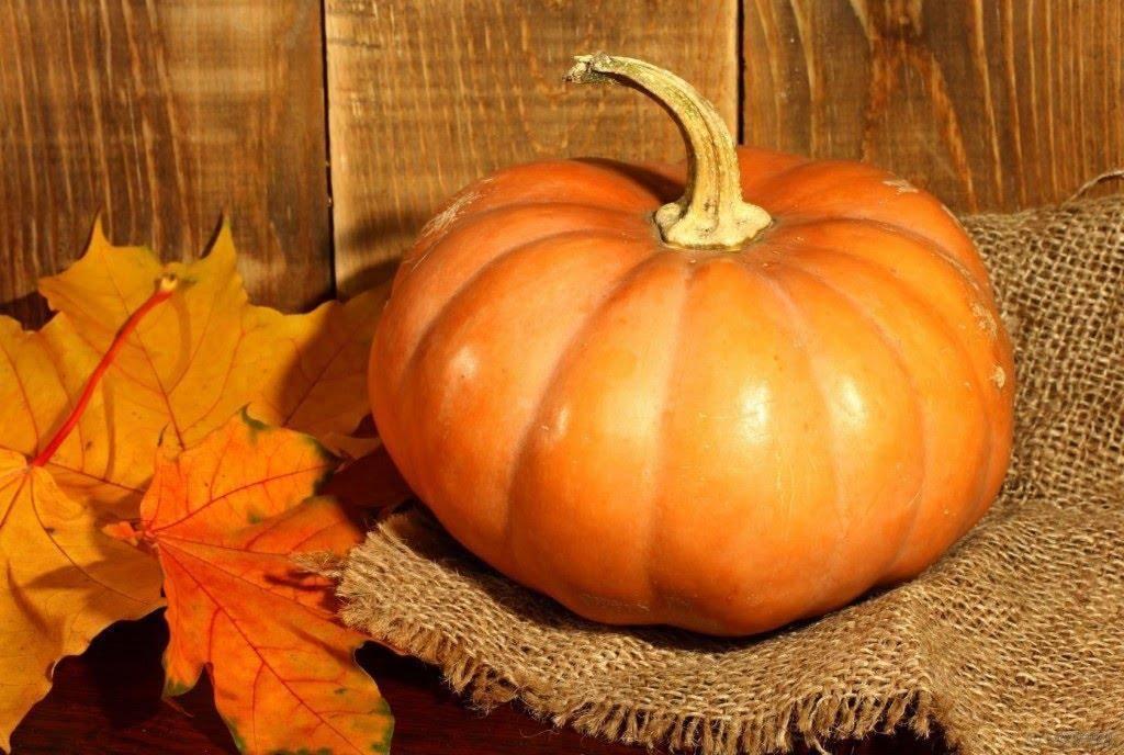 Почему желтеет тыква: сохнут листья, завязь, плоды, причина — selok.info