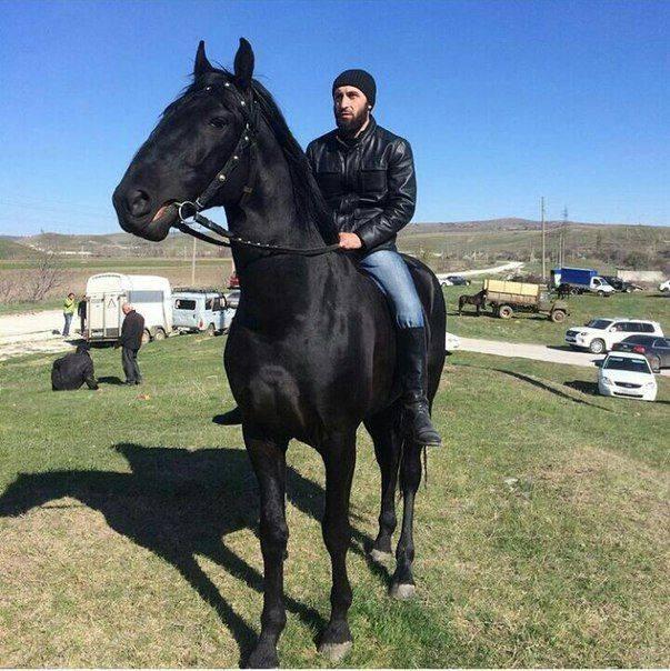 Карачаевская порода лошадей: история и описание, правила содержания