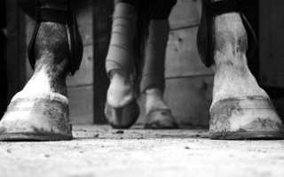 Подковы для лошадей — зачем нужны, какие есть виды, как подковать