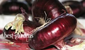Выращивание ялтинского лука в средней полосе россии и подмосковье: как и когда посеять семена на рассаду и правильно ухаживать за культурой до получения урожая?