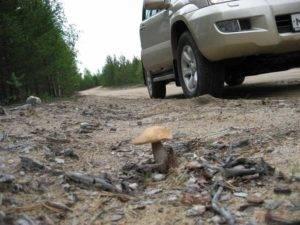 За что могут оштрафовать при походе за грибами