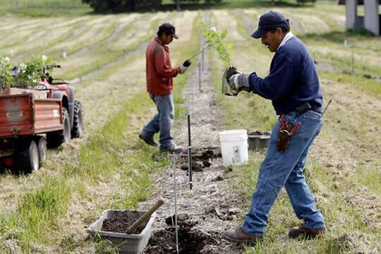 Выращивание трюфелей как бизнес