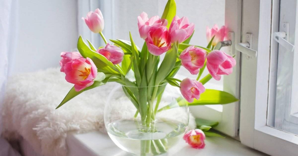 Принцип хранения тюльпанов в домашних условиях - описание сухого метода и хранения цветов в воде
