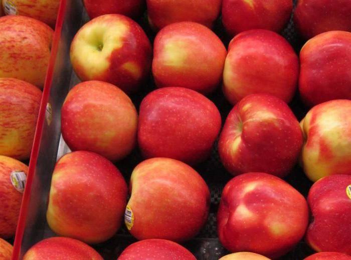 Сорт яблони свежесть: описание, фото