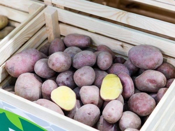 Картофель колобок: характеристика и описание сорта, фото, отзывы