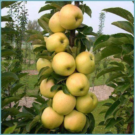 А вы знаете, как обрезать яблоню правильно? наши эксперты расскажут