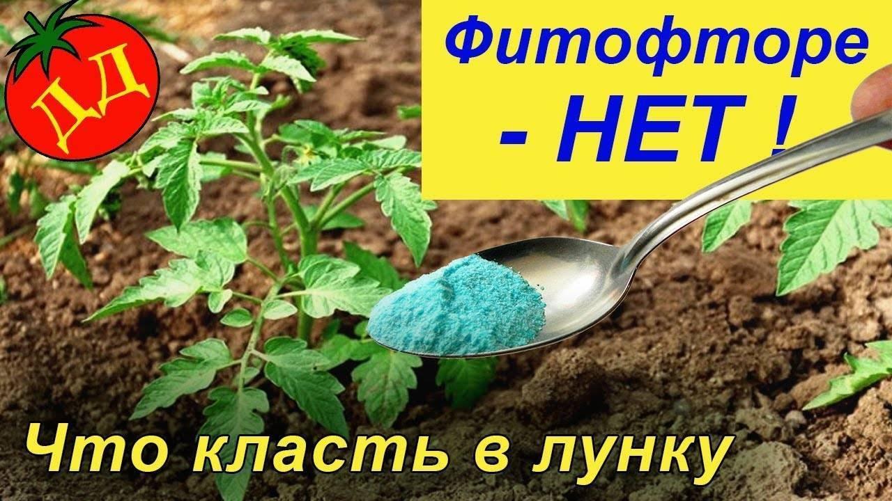 Можно ли сажать помидоры по два куста в одну лунку: какие томаты помещают в ямку по несколько штук и что даёт данная технология, каков процесс выращивания корней? русский фермер