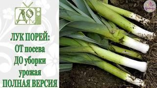 Лук порей: выращивание и уход в сибири