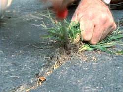 Ничего сложного: 5 лучших методов борьбы с сорняками на дачном участке
