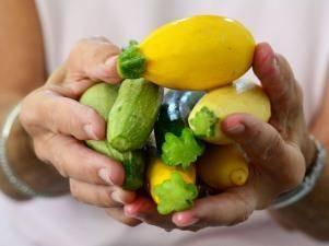 Чем отличаются кабачки и патиссоны: разница во внешнем виде, вкусе и других параметрах