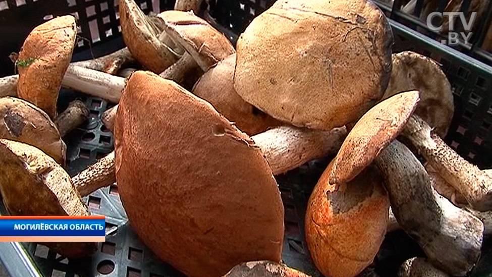 Съедобные и ядовитые луговые грибы