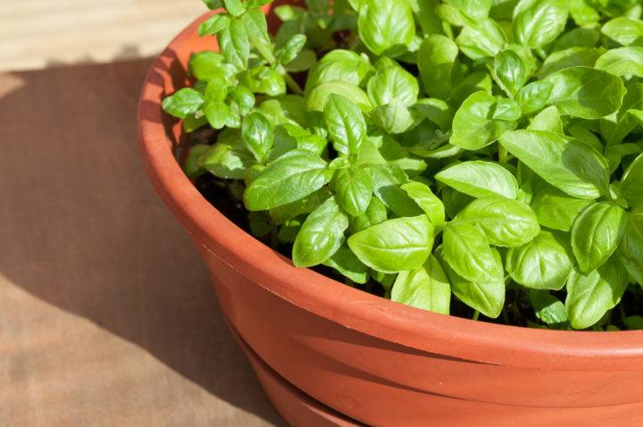 Какую зелень можно вырастить на подоконнике?