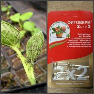 Фитоверм: инструкция по применению, когда и как обрабатывать растения