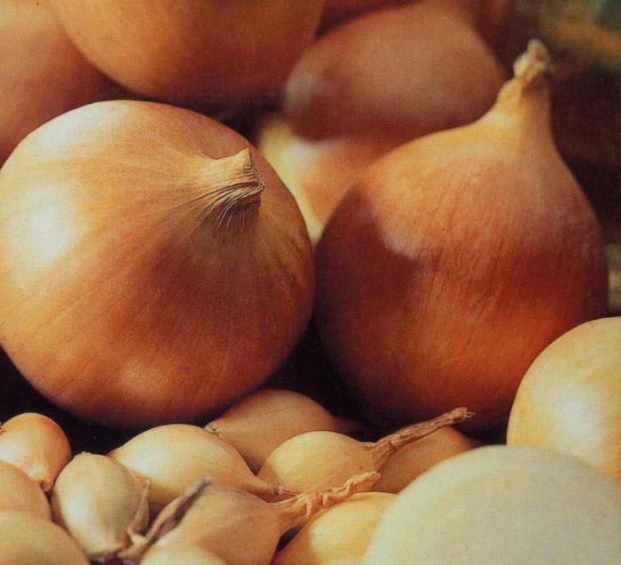 Лук центурион: описание сорта, выращивание, отзывы, фото