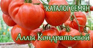 Томат «аделина»: особенности выращивания и уход