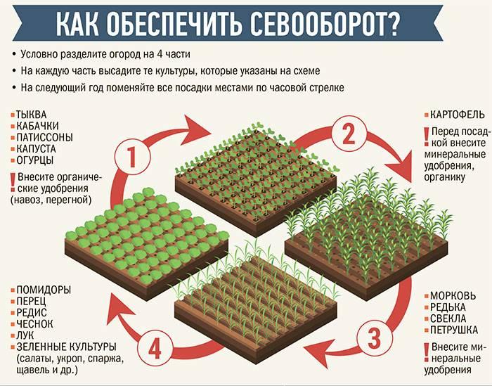 Севооборот на огороде: что после чего можно сажать