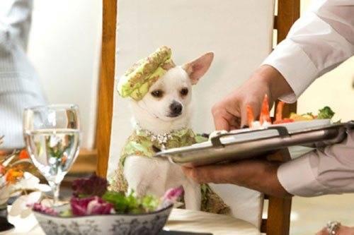 Можно ли собакам кабачки и как их давать
