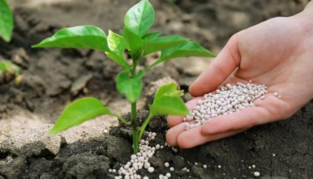 Чем подкормить перец: рецепты для роста и высокой урожайности. народные средства и лучшие идеи по применению подкормки при выращивании перца в домашних условиях